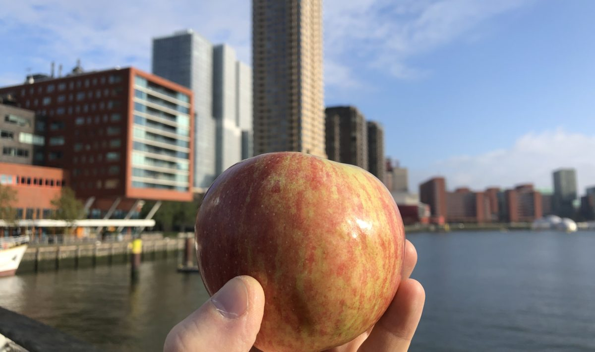 A Sholan Farms apple in Rotterdam, Netherlands