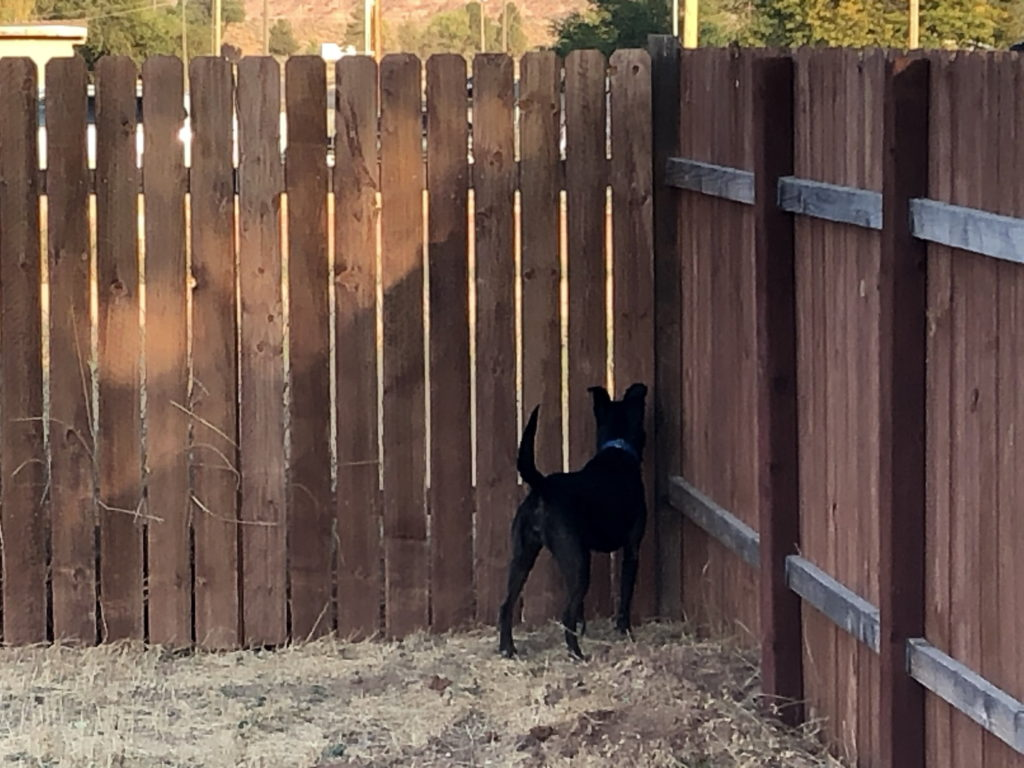 A black dog with its nose pressed into the corner of a fence