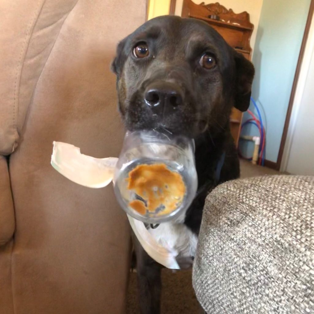 Black dog with ears down holding nearly empty plastic jar of peanut butter