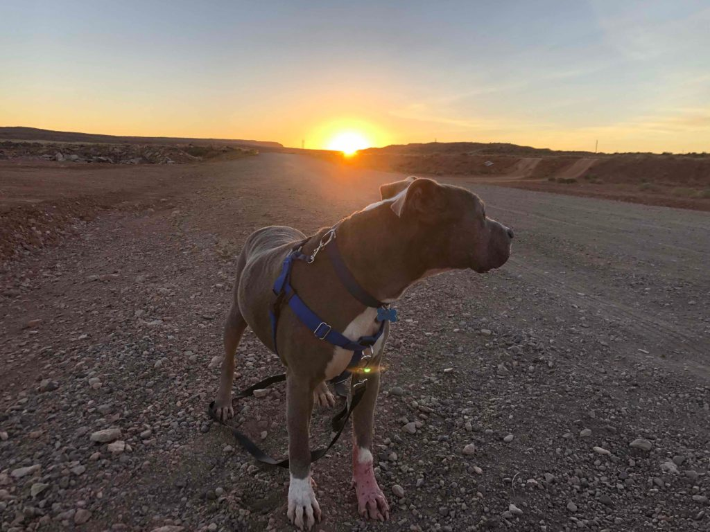 Mr. Big standing on a dirt road with the Arizona sun rising behind him
