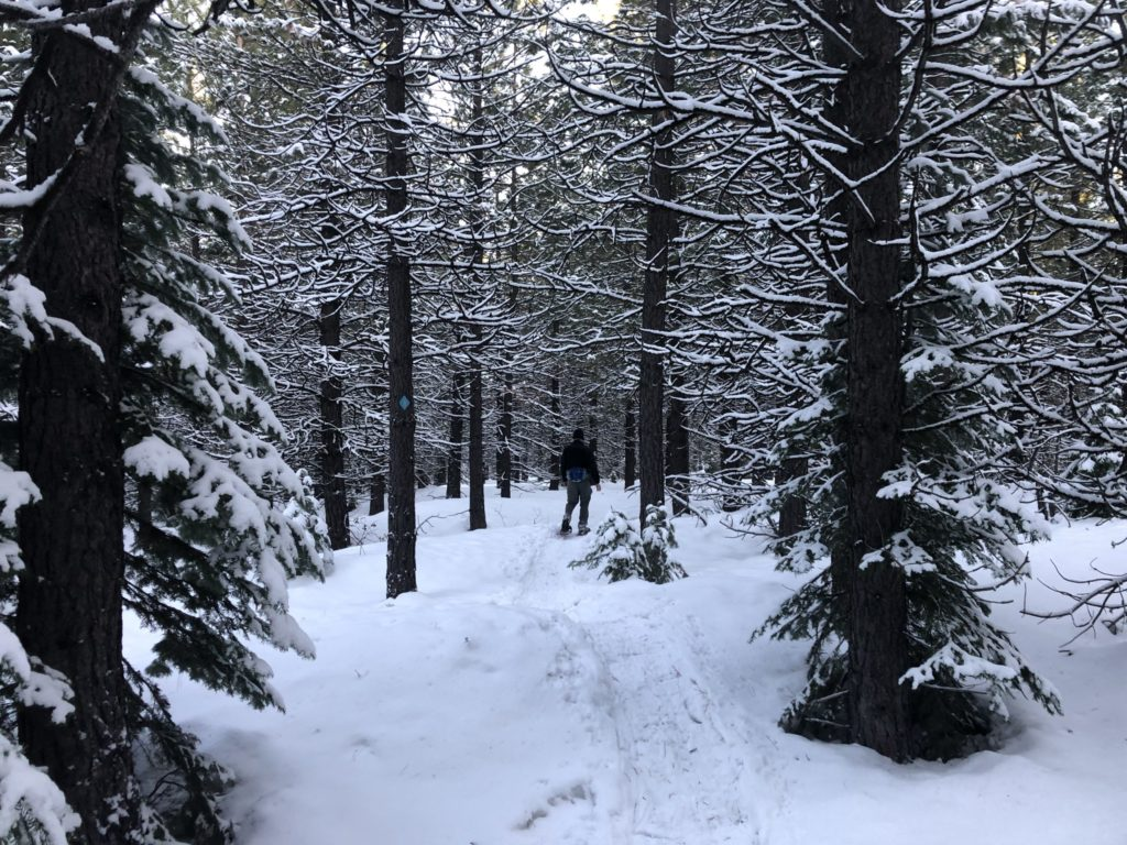 Peter, off in the distance, snowshoes into the woods of Bend, Oregon